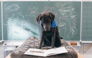 Der Schulhund sitzt vor der Tafel und blickt in ein Buch.