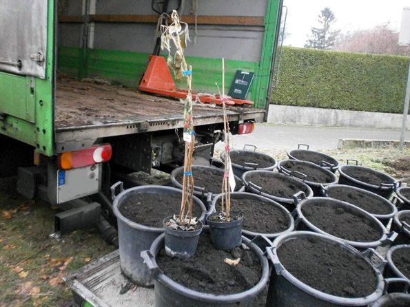 Der Sand für den Schulgarten wird in Kübeln angeliefert.