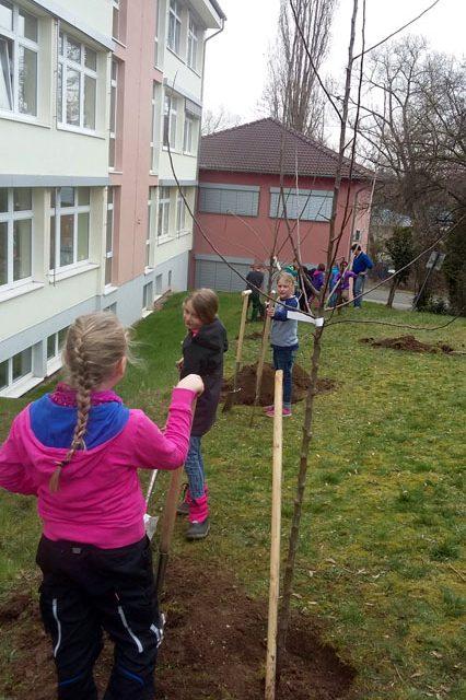 Unser Schulgarten (2): Es wird gepflanzt