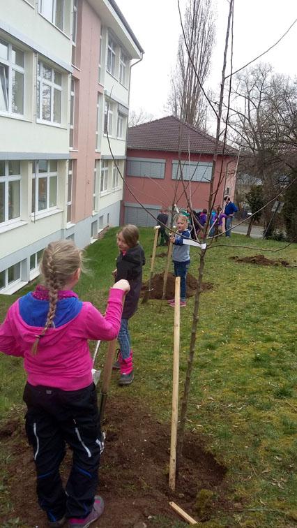 Kinder setzen im Schulgarten die Obstbäume ein.