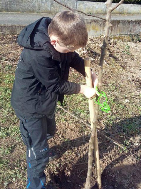 Unser Schulgarten (3): Bäume beschneiden und Beete bepflanzen