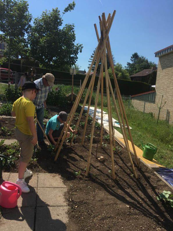 Im Schulgarten stellen der Hausmeister und die Kinder die Stangen für das Bohnen-Tipi auf.