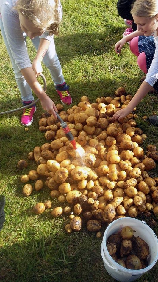 Die Kinder waschen die Kartoffeln, die sie vorher im Schulgarten ausgegraben haben.