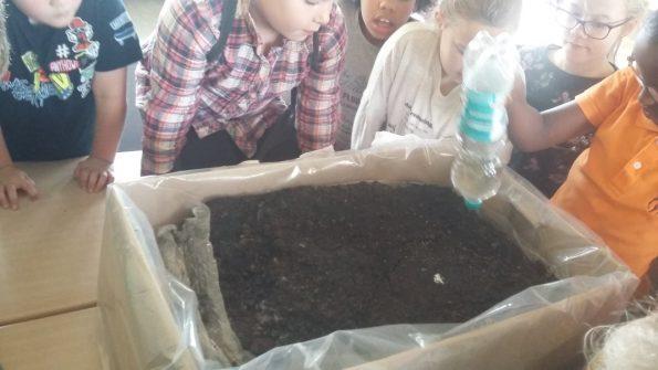Schulkinder stehen um eine Pflanzkiste und wässern die Erde, in der die Pilze wachsen.