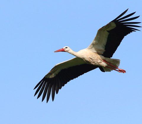 Umwelterziehung (1): Zugvögel