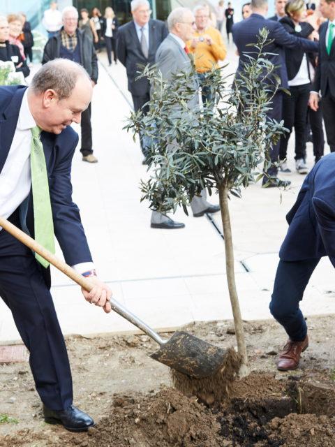 Umwelterziehung (6): 1 000 000 000 000 Bäume gegen den Klimawandel