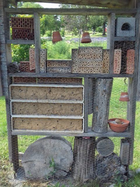 Was kann man gegen das Bienensterben <br class=